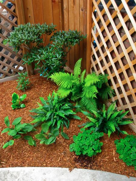Landarc landscaping design for Less maintenance plants