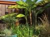 Layering Plants